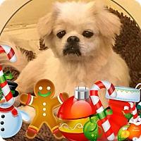 Adopt A Pet :: IRIS - SO CALIF, CA