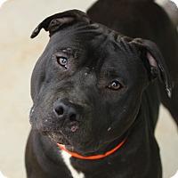 Adopt A Pet :: Salim - Lafayette, IN