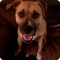 Adopt A Pet :: Lola - Raleigh, NC