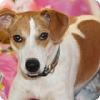 Adopt A Pet :: Anya - Avon, NY