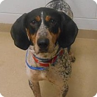 Adopt A Pet :: Jed - Wooster, OH