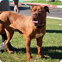 Adopt A Pet :: Hicks - Goodyear, AZ