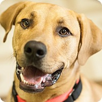 Adopt A Pet :: Junior - Red Wing, MN