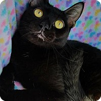 Adopt A Pet :: Janis - Hornell, NY