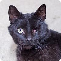 Adopt A Pet :: Inkjet - Toronto, ON