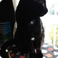 Adopt A Pet :: Akira - Westminster, MD