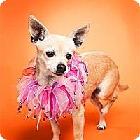 Adopt A Pet :: Sunkist (Kissy) - Orange, CA