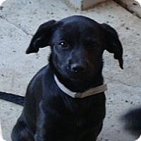 Adopt A Pet :: JUNE BUG - Riverside, CA