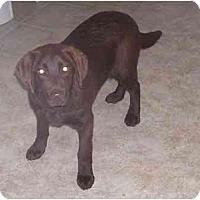 Adopt A Pet :: Bryn-Purebred ! - Chandler, IN