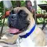 Adopt A Pet :: Leah - Thomasville, GA