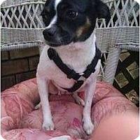 Adopt A Pet :: Princess - Bloomingdale, GA