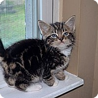 Adopt A Pet :: Lopez - Xenia, OH