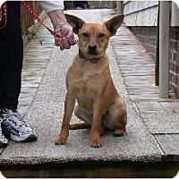 Adopt A Pet :: Dixie - Washington, NC