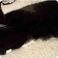 Adopt A Pet :: Snuggies - Alexandria, VA