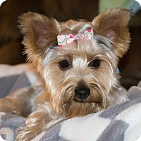Adopt A Pet :: Stella - Statewide and National, TX