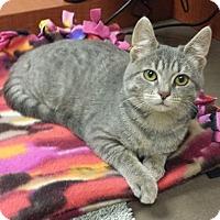 Adopt A Pet :: Sapphire - Audubon, NJ