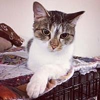 Adopt A Pet :: Gem - Cleveland, OH