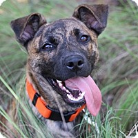 Adopt A Pet :: Pipi-Adoption Pending - Pinehurst, NC