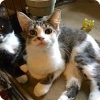 Adopt A Pet :: Huggie - Colmar, PA