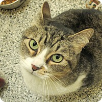 Adopt A Pet :: Tweet - Eastsound, WA