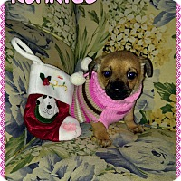 Adopt A Pet :: Klarice - Fowler, CA