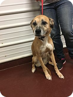 Shepherd (Unknown Type) Mix Dog for adoption in Newburgh, Indiana - Piper