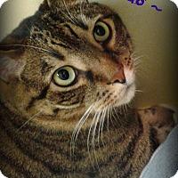 Adopt A Pet :: Brutus - Monroe, NC