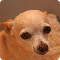 Adopt A Pet :: Fefe - Tucson, AZ