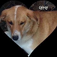 Beagle/Labrador Retriever Mix Dog for adoption in Princeton, West Virginia - Gypsy