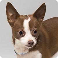 Adopt A Pet :: Benson - Westfield, NY