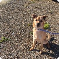 Adopt A Pet :: BRODIE - Elk Grove, CA