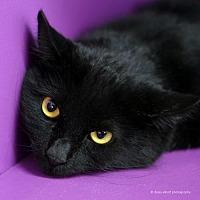 Adopt A Pet :: Quade - Tucson, AZ