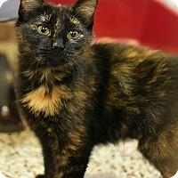 Adopt A Pet :: Ajira - Aiken, SC