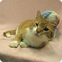 Adopt A Pet :: Goldie - Redwood Falls, MN