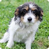 Adopt A Pet :: Kansas - Waldorf, MD