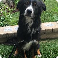 Adopt A Pet :: MAX - San Pedro, CA