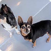 Adopt A Pet :: Spring - Seattle, WA
