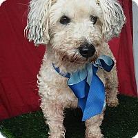 Adopt A Pet :: SAM - Santa Monica, CA