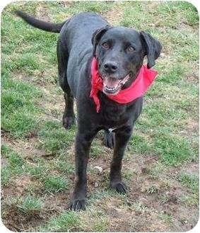 Labrador Retriever/Border Collie Mix Dog for adoption in Meridian, Idaho - Emily