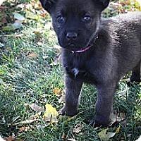 Adopt A Pet :: DayTripper - Broomfield, CO