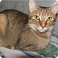 Adopt A Pet :: Josie - Norwich, NY