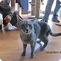 Adopt A Pet :: Missy - Corinth, NY