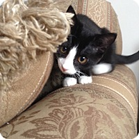Adopt A Pet :: Zari - Trevose, PA