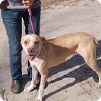 Adopt A Pet :: Rebecca - Marlton, NJ