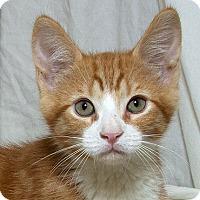 Adopt A Pet :: Wilbur M - Sacramento, CA