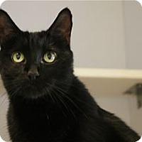 Adopt A Pet :: Pepper - Lincoln, CA