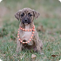 Adopt A Pet :: Cleo $250 - Seneca, SC
