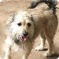 Adopt A Pet :: Chance - MEET ME! - Norwalk, CT