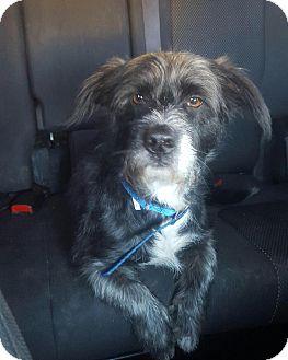 Terrier (Unknown Type, Medium) Mix Dog for adoption in Sagaponack, New York - Kaiser