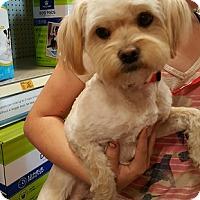 Adopt A Pet :: Garvey - Alhambra, CA